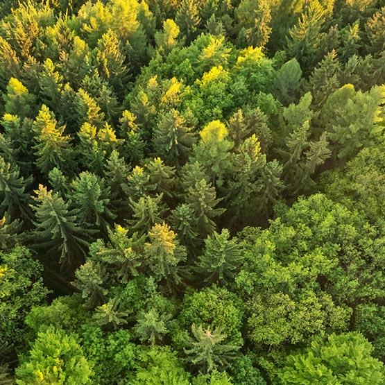 Holzpellets aus der Region Westerwald